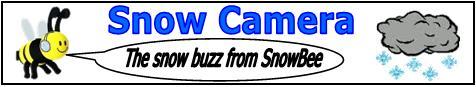 SnowBee Buzz